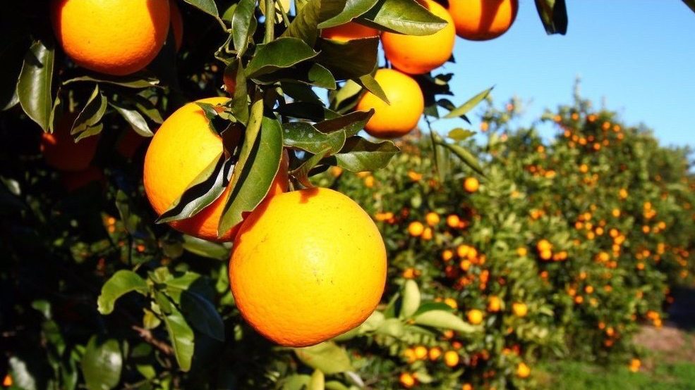 Fresh solutions: how JBT allies developed an innovative system for Grove Fruit Juice